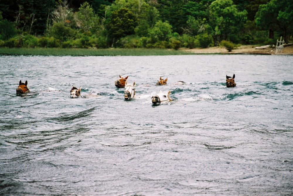 Swimming Horses, Lanin.JPG
