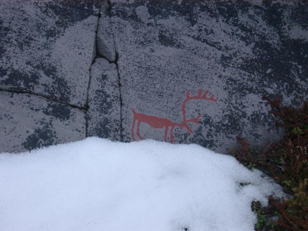 Reindeer, Alta.JPG
