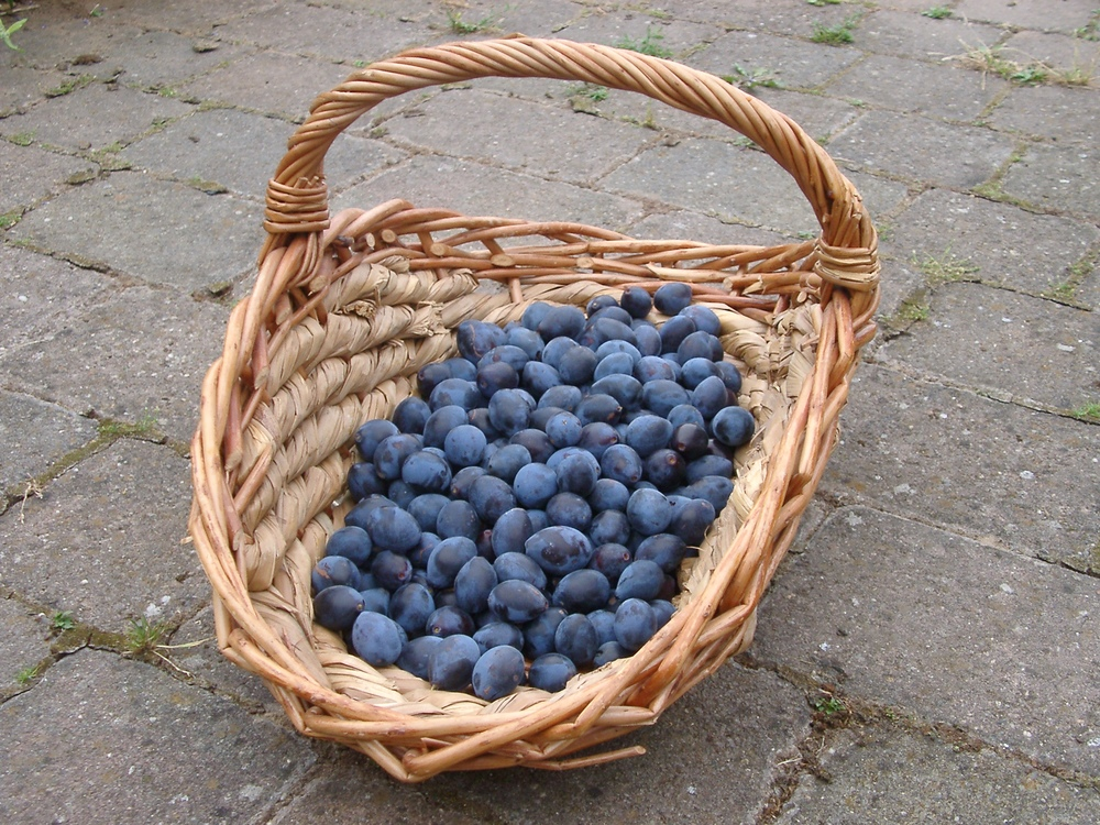 Damsons, Little Alne.JPG
