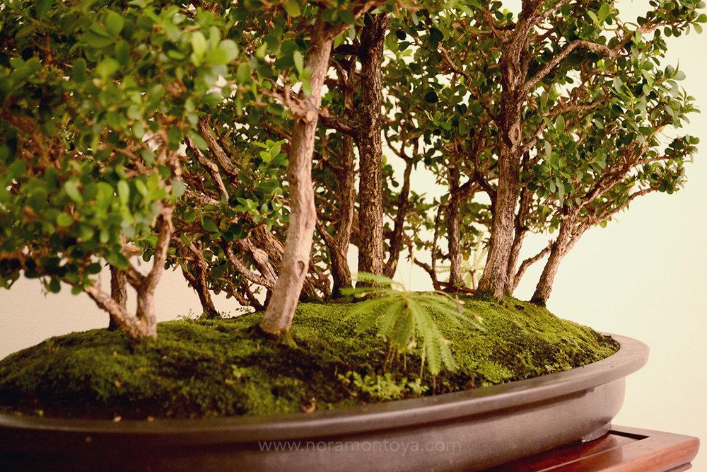 Bosques del Marqués 026.jpg