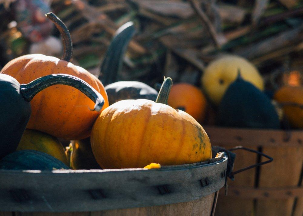 Pumpkins in Bucket for Trunk or Treat