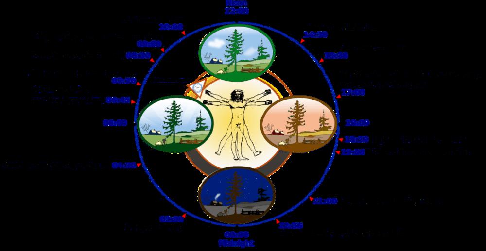 Our 24-hour biological rhythms are called our    Circadian Rhythm