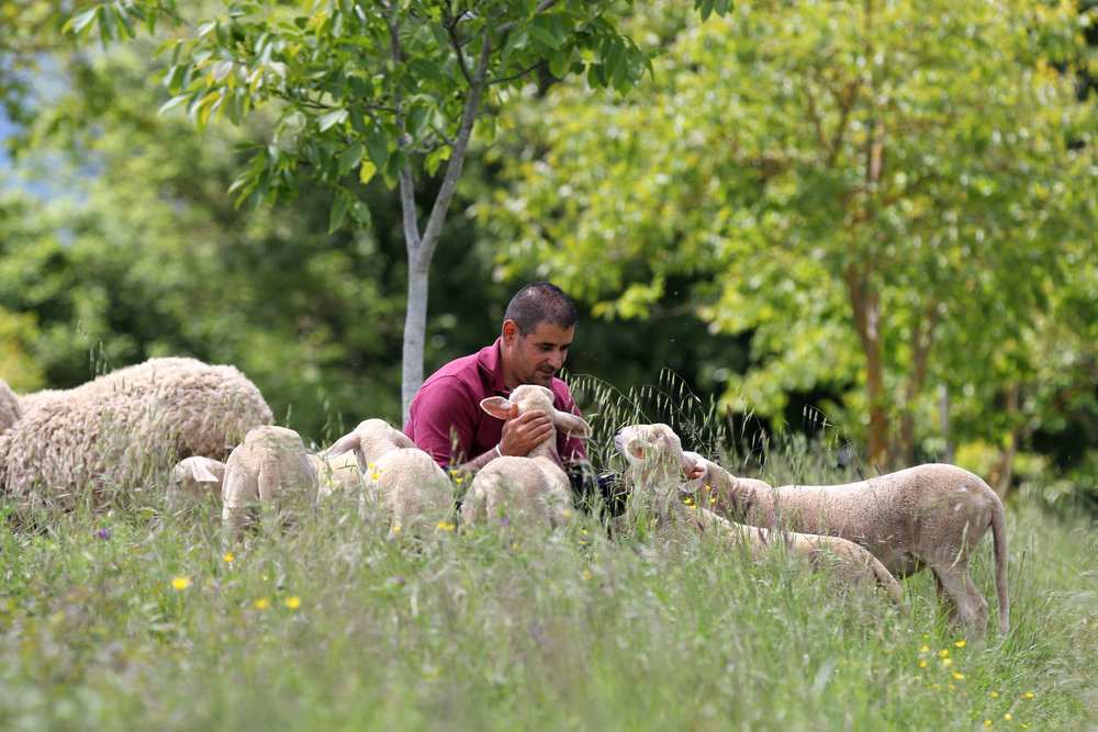 Shepherd and flock.JPG