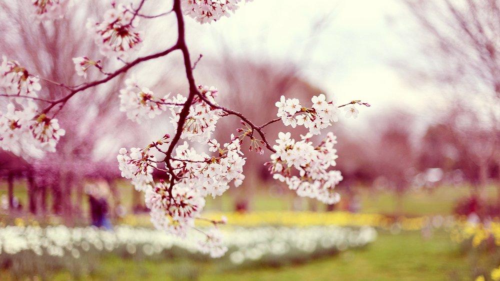 spring flower.jpeg