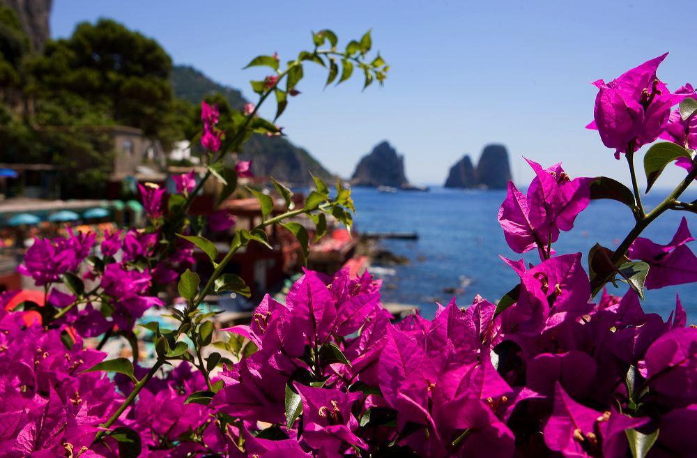 capri flowers.jpg