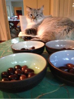 Leda enjoys taste tests too.