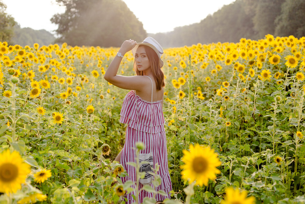 Stripes and Sunflowers