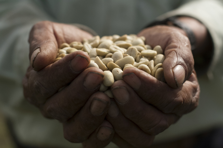 Our beans are planted, harvested, roasted, packaged, and served by hand.