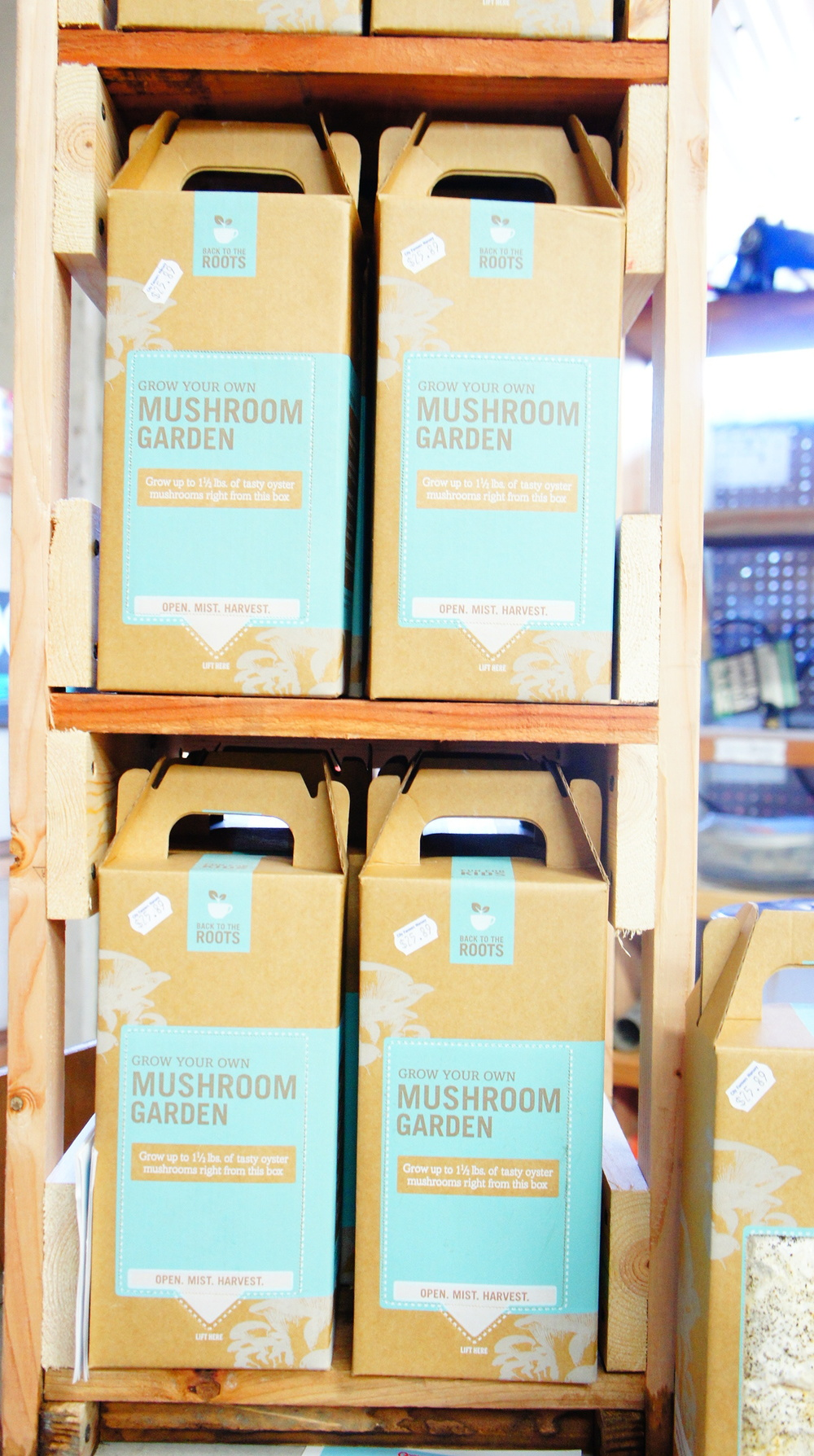 grow-your-own-mushroom-kits.JPG