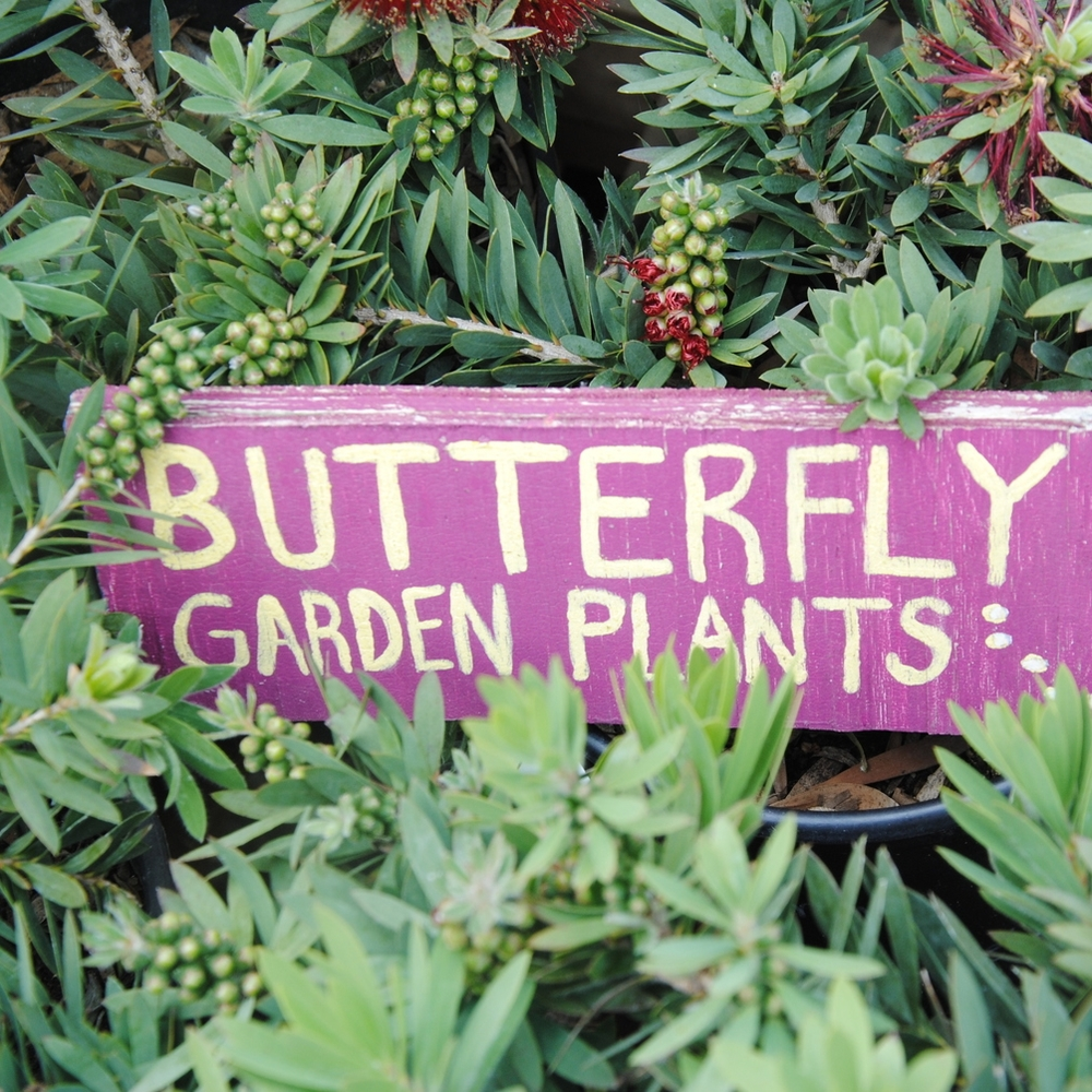 Butterfly Friendly Plants