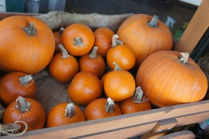 pumpkins_for_carving_san_diego