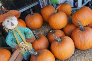 Local_pumpkin_patch_in_san_diego