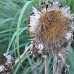 Artichoke (7)