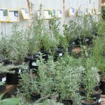 Our native plants are restocked weekly!  Prices vary