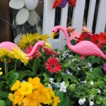 Our miniature flamingo love-birds amongst the blooms!