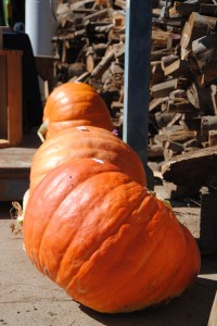 ...we will be judging the winners of our Pumpkin and Zucchini Growing Contests!