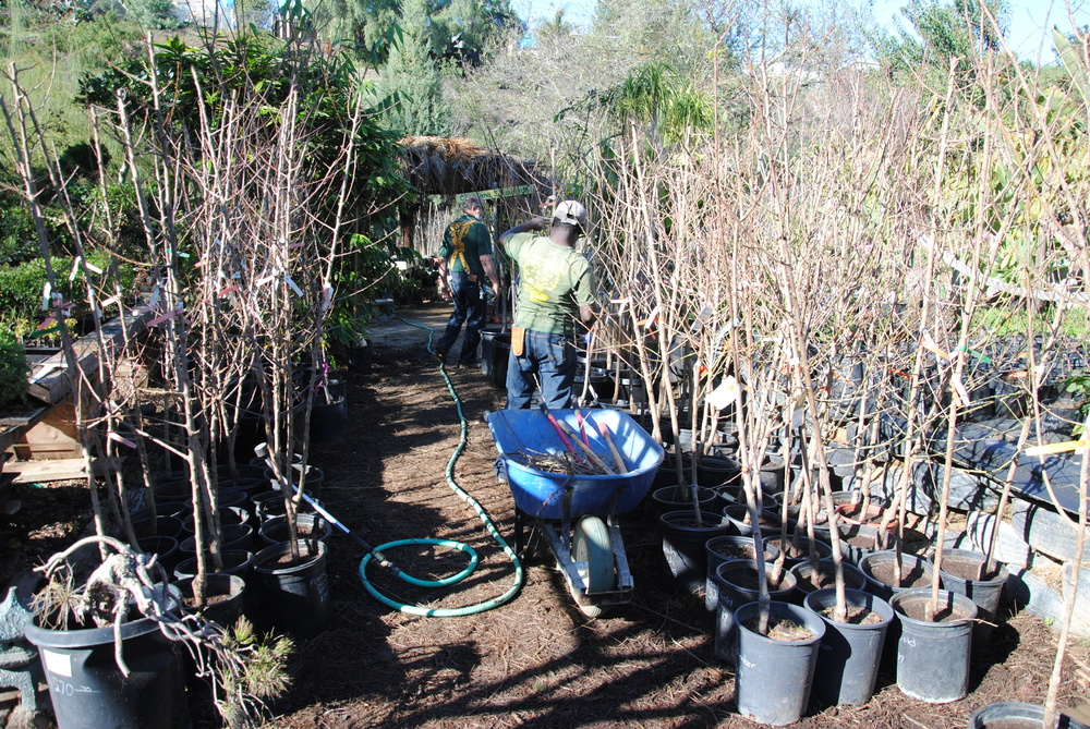 A big variety of bare root fruit trees looking for a good home.