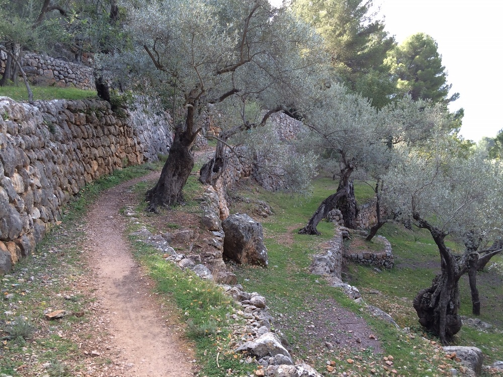 Great Circle Route, Mallorca, Olive Trees