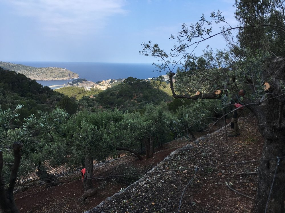View of Port Soller Harbor, Mallorca