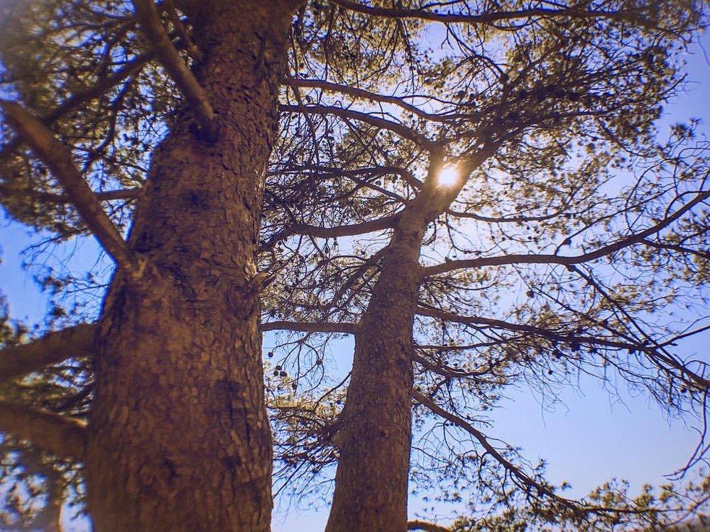 california blue 2 (at Dante's Peak)