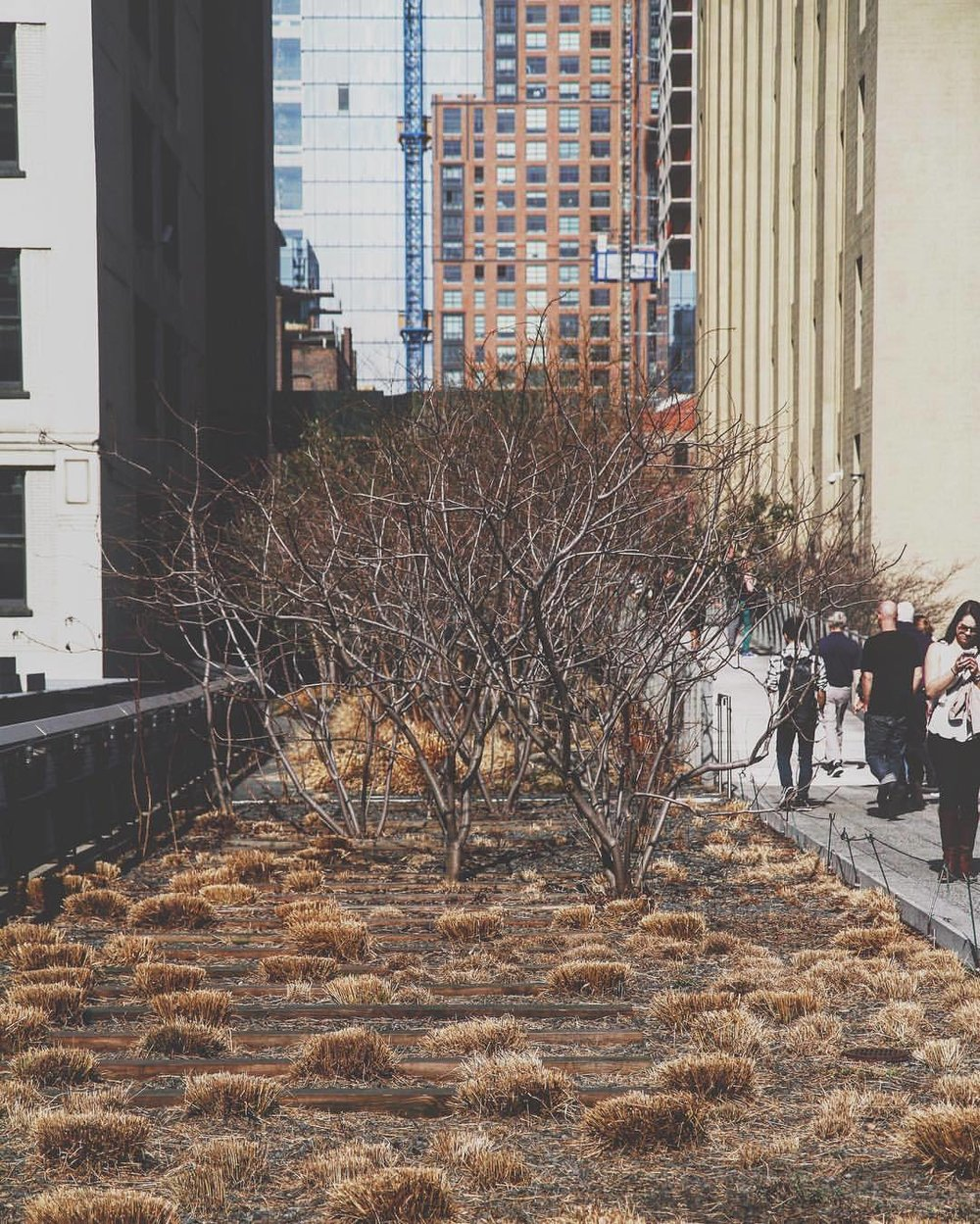 hoping for green (at Highline Park)