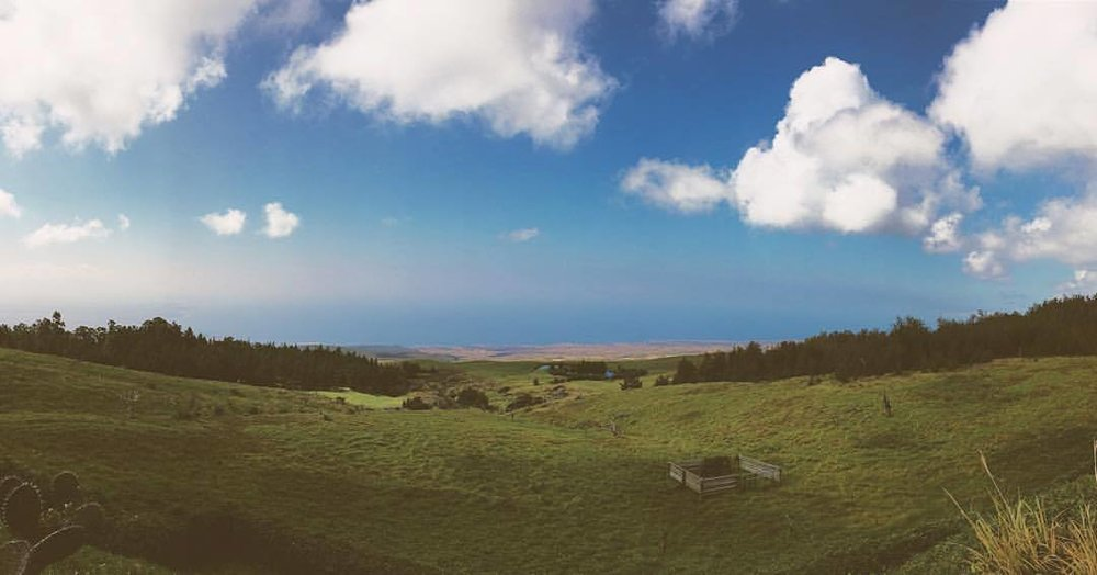 at Kohala Mountain Road