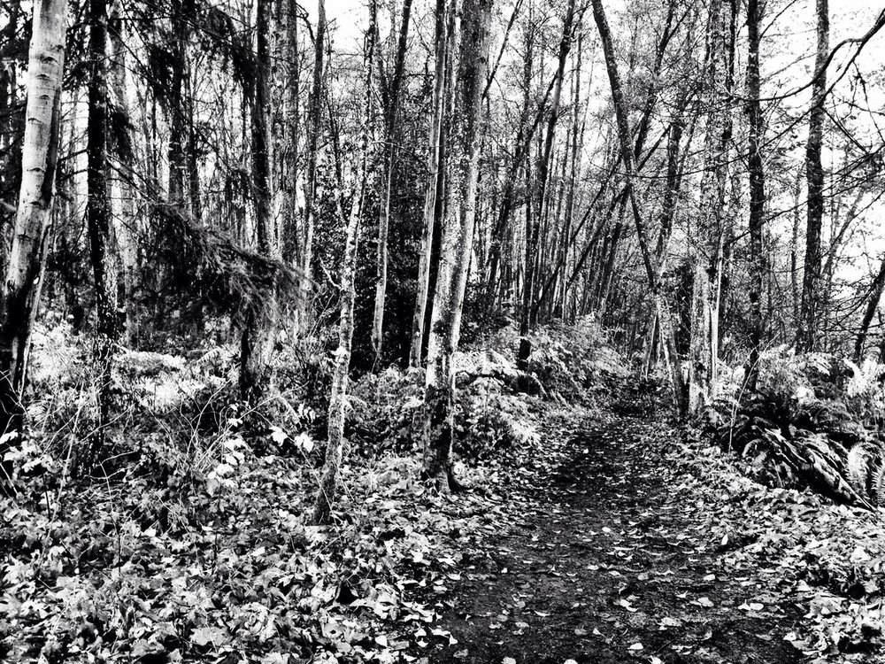 From earlier, Pacific Spirit Park. at Pacific Spirit Regional Park – View on  Path .