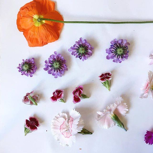 "Pressing flowers today...and every day! I'm always asked where I get my flowers from and the answer is; everywhere! I grow as many as I can, my dad gardens as well and we make regular ""business trips"" out to the okanagan to visit our friends at @lavenderandlacefloralfarm 💗💗💗 All of these blooms are from my garden🌸 . . . . . . . . .  #fleurslove #flowergram #theartofslowliving #seekthesimplicity #mothernature #flowerstalking #roses #rosestagram #welcometothejungle #botanicalpickmeup #gypsyskulls #searchwandercollect #pin #getwild #searchwander #livefolk #underthefloralspell #flowersgivemepower #floraldesign #pressedflowers #homedecor #handcrafted #handmade #pursuepretty #thatsdarling #natureinthehome #floral_perfection #floralfix #plantsmakepeoplehappy #leaflove @preview.app"