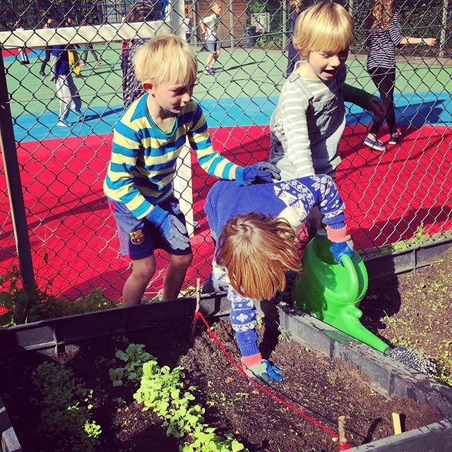 Love it #kidsgardening #schoolgardeningclub. Planting parsley and spring onions!!