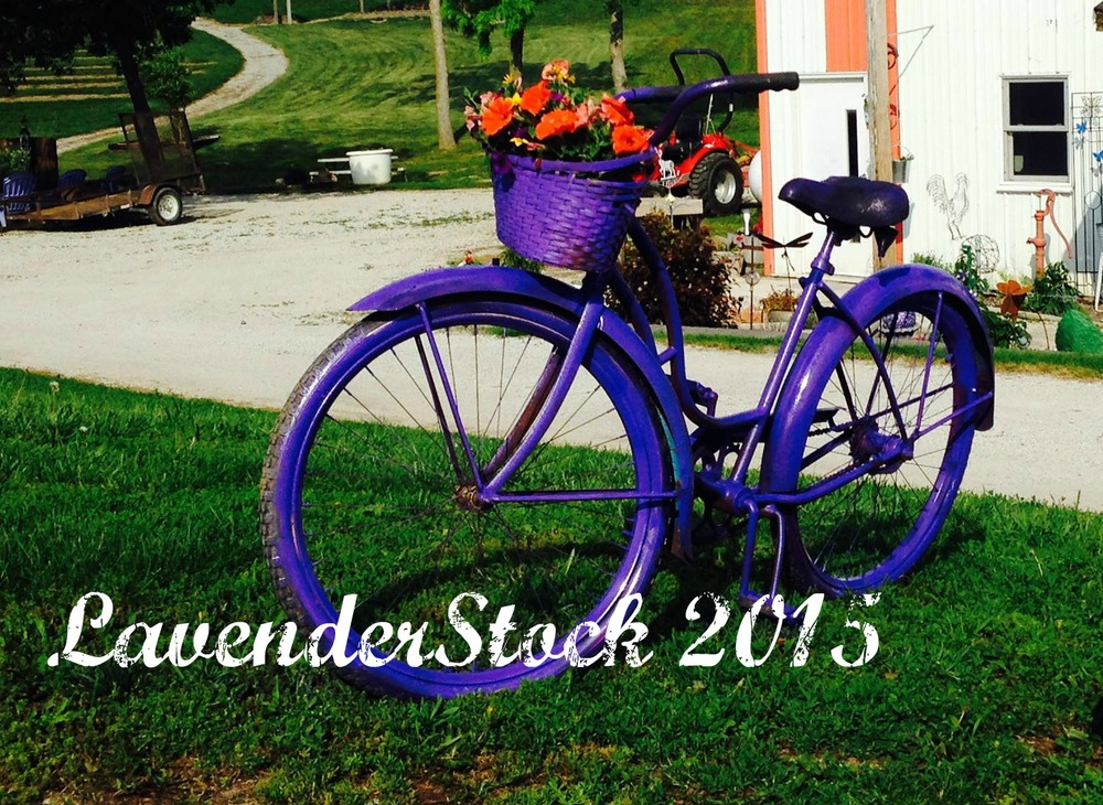 LAvenderstock was our newest event in 2015. We are looking forward to growing this event into our signature gathering each year..