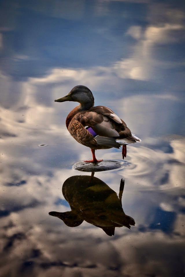 Reflective Balance