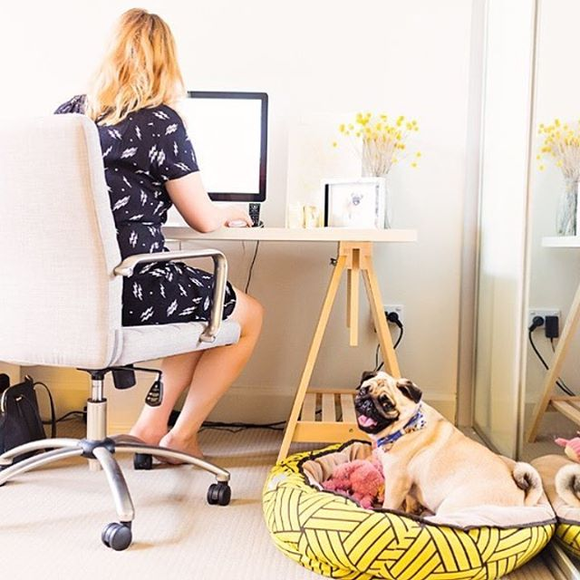 Who here has a doggy (or kitty) workmate? (I've got two!) Love a furry friend in the office. @apugcalledwilma via @pretty_fluffy 🐶💕