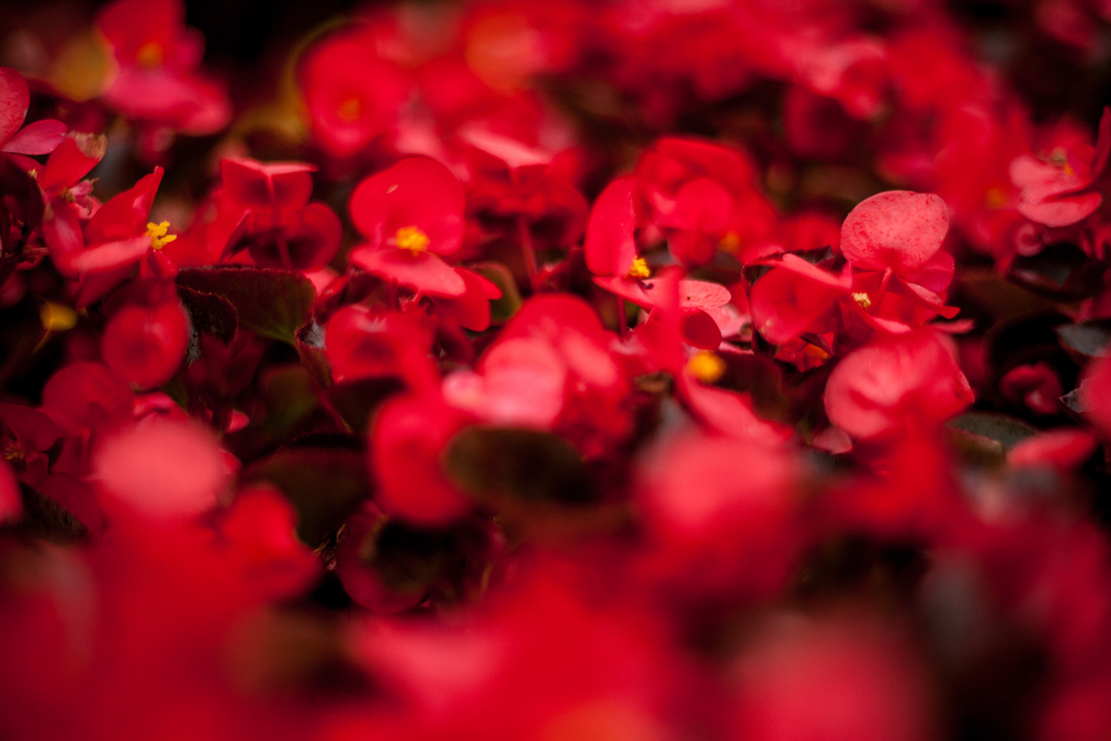 timelapse-flowers.jpg