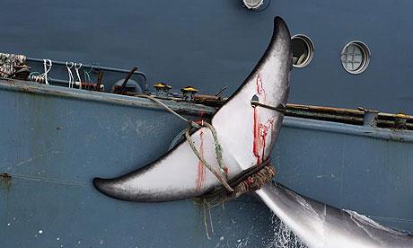 Rachael Robertson Japanese Whaling
