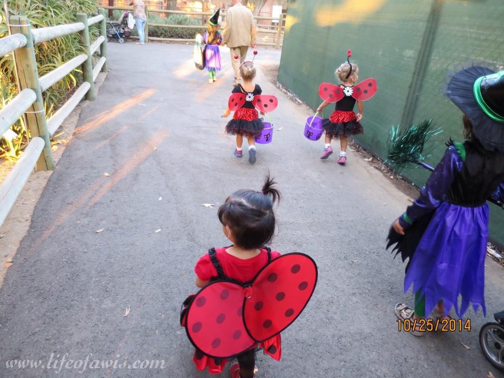 @babyofawis found a few ladybug friends...