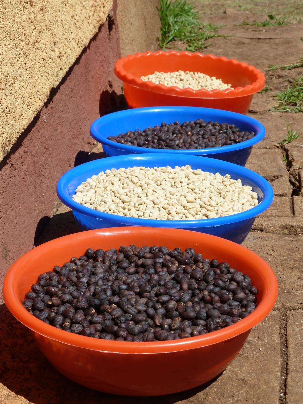 ethiopia beans.jpg