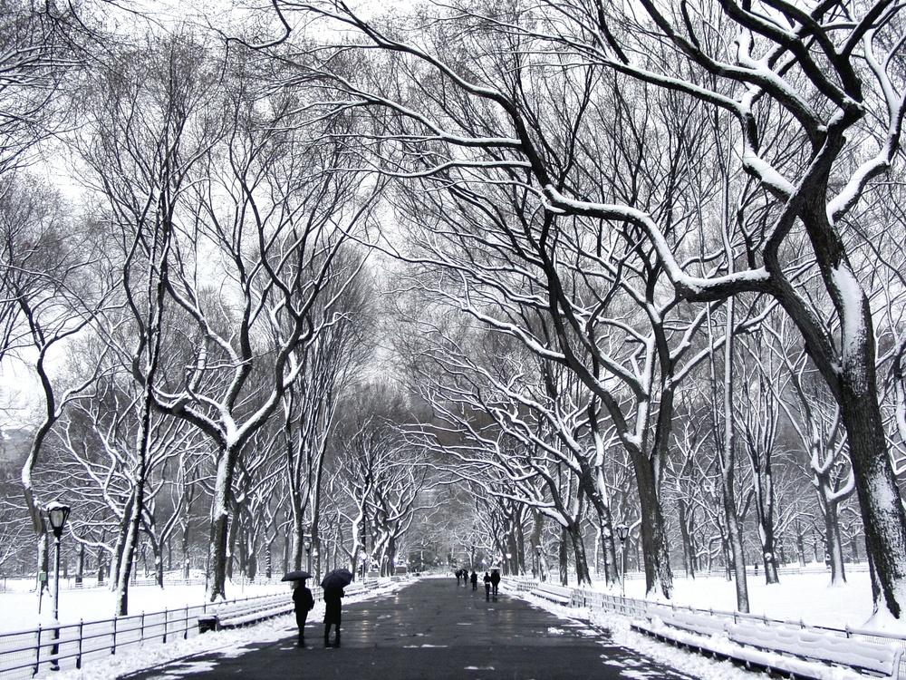 Central Park Winter.jpg