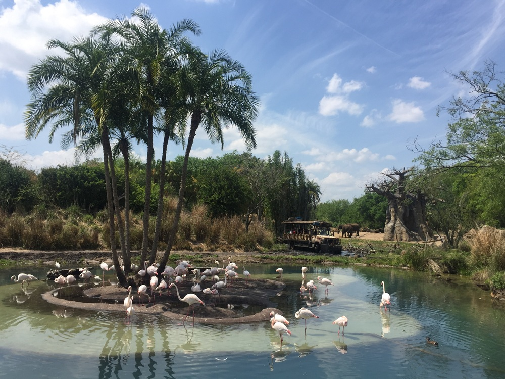 My favorite view in all the parks! The flamingo pond at Animal Kimgdom.
