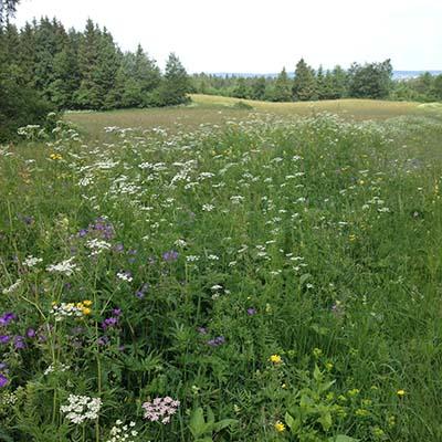Grass for Comté