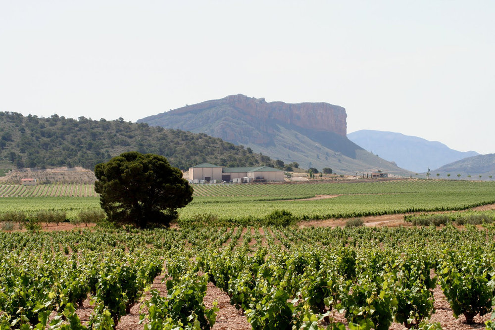 Jumilla Vineyards.jpg
