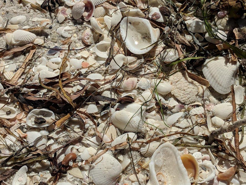 Gorgeous shells