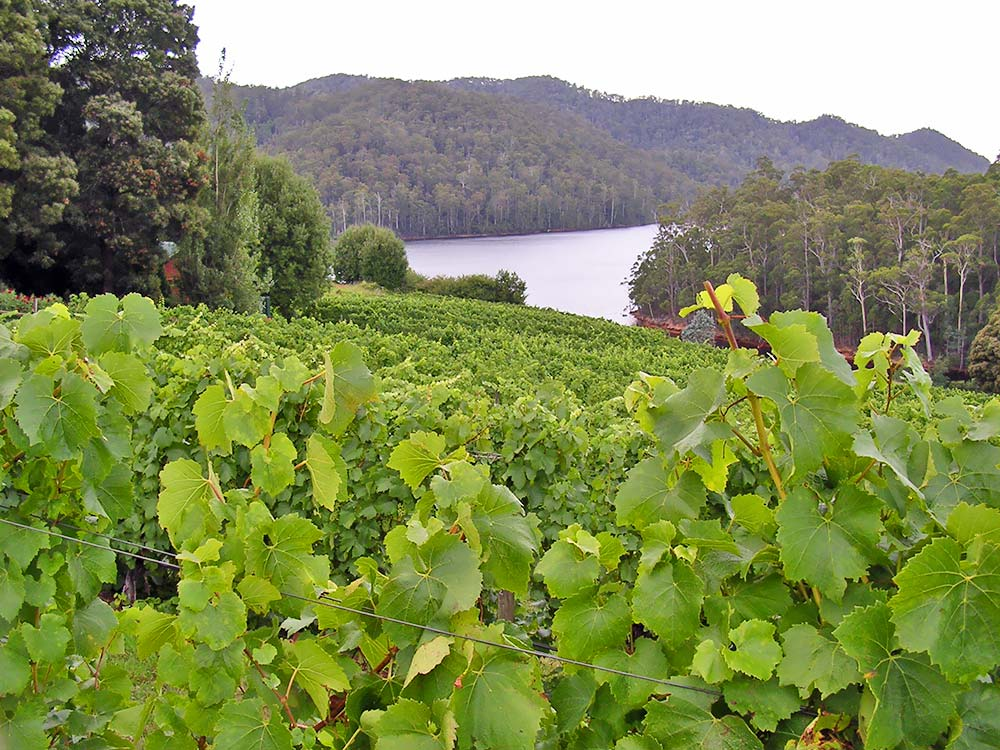 Lake Barrington Vineyard