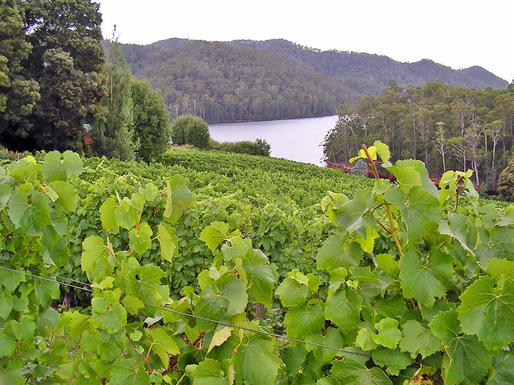 Lake Barrington Vineyard