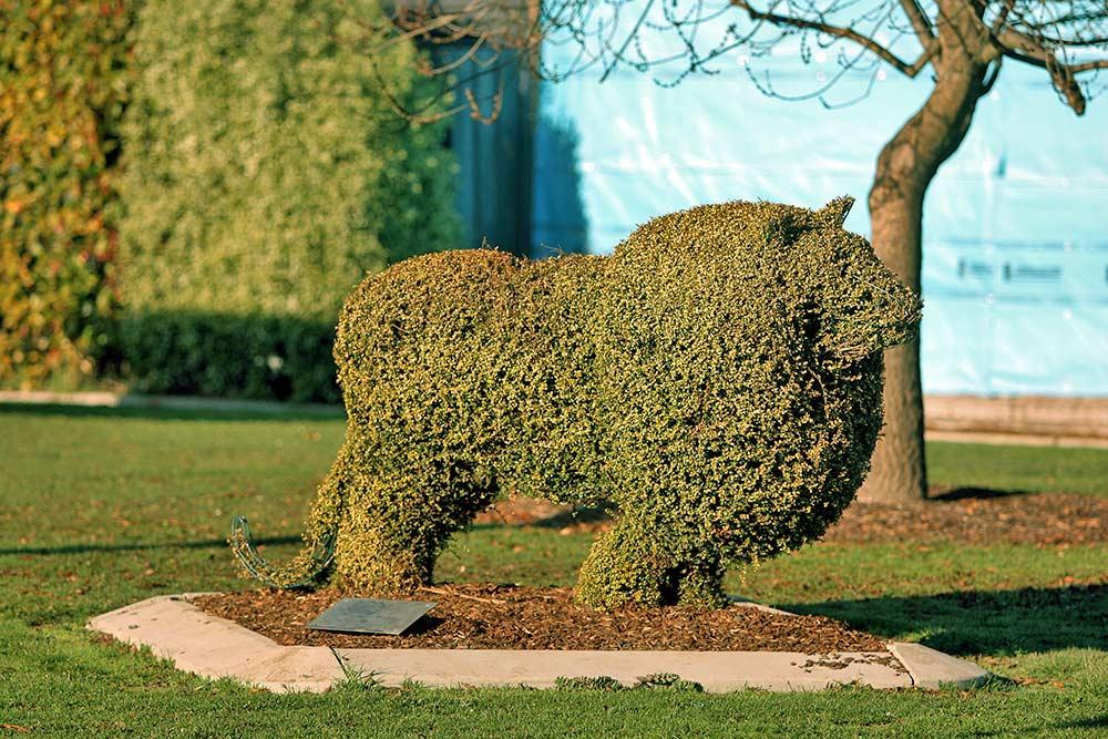 Topiary @ Railton