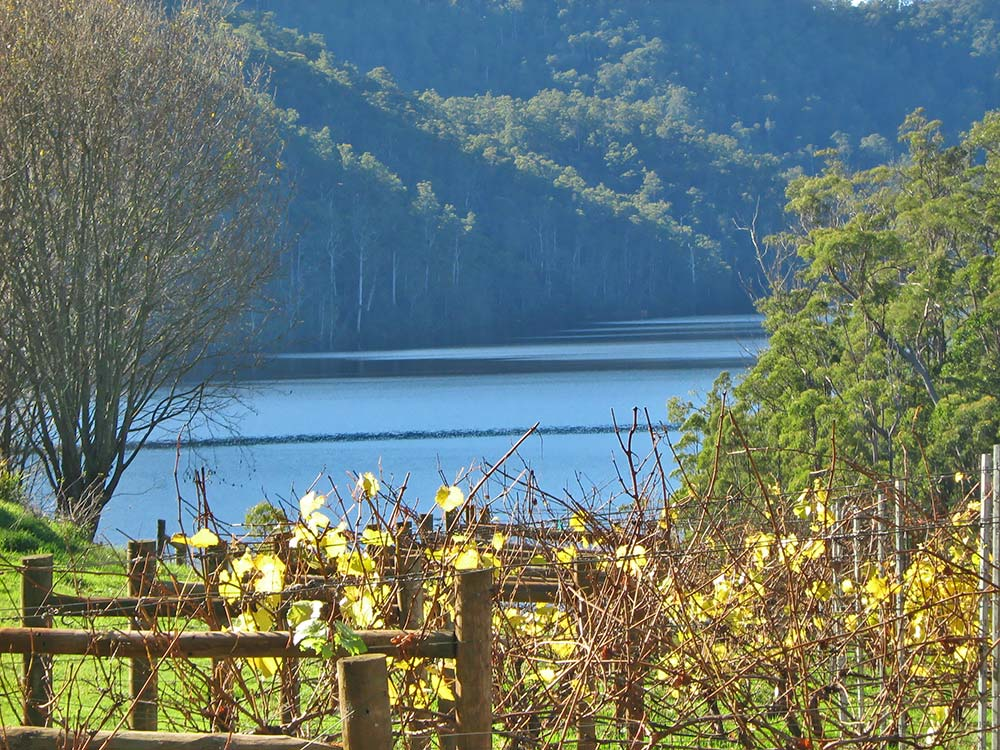 Lake-Barrington-Vineyard.jpg