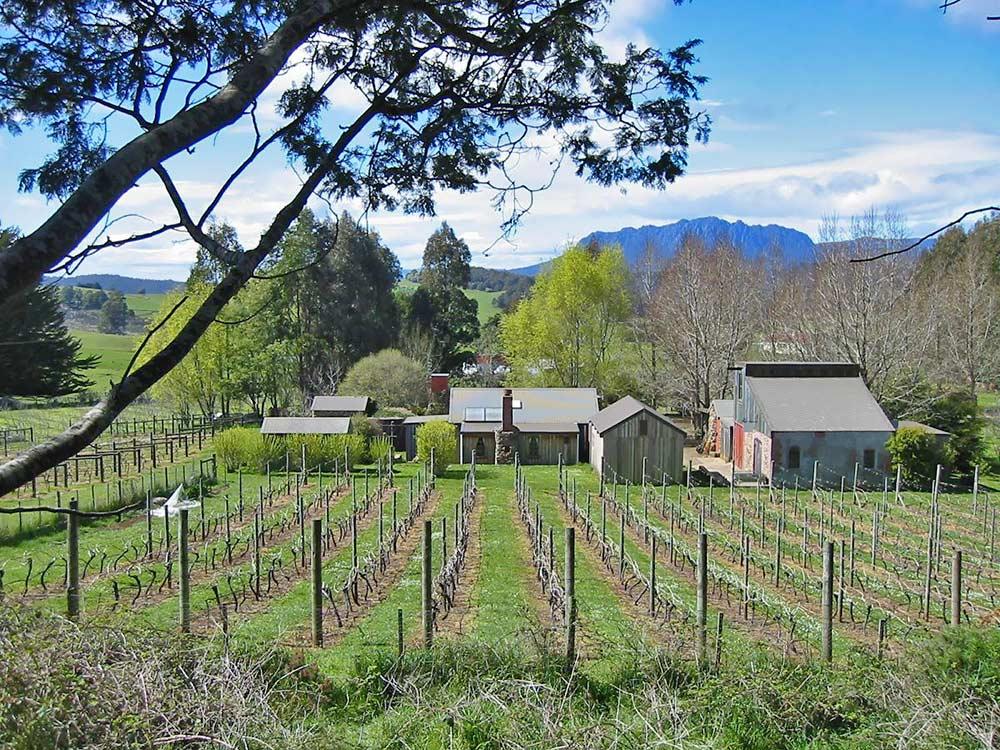 Wilmot-Hills-vineyard.jpg