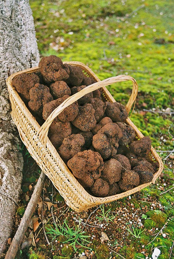 Original__9563233_WATC_Dirty_Truffles_3.jpg