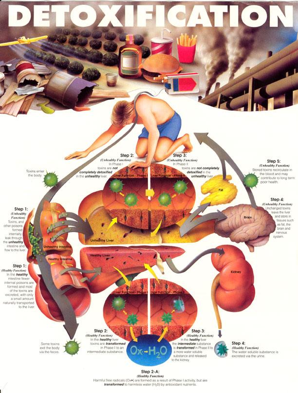 Detoxification.jpg