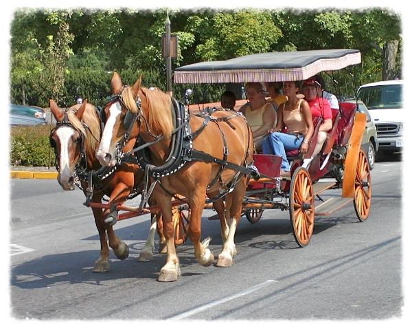 Lexington's Famous Carriage Ride