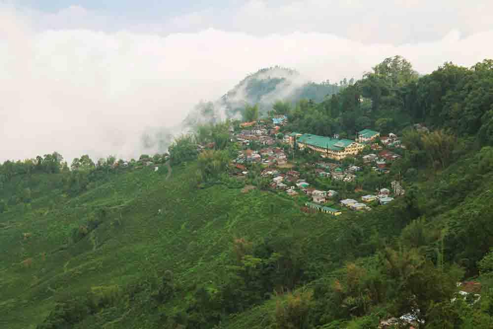 Makaibari Tea Estate - View of Makaibari tea estate from our retreat venue